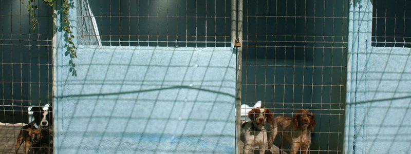 Residencia de Perros de Caza