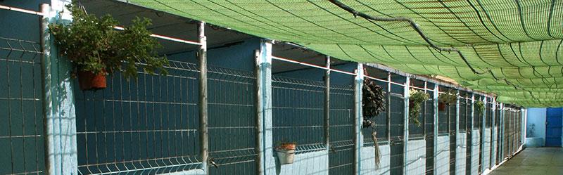 residencia para perros madrid