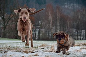 educador canino madrid adiestramiento