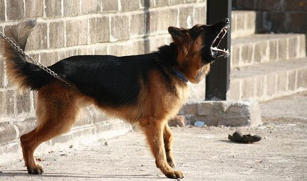 calmar ladrido perro