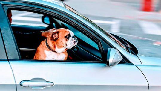 viajar en coche con un perro