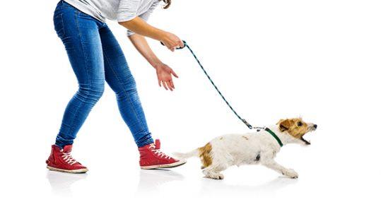 evitar los ladridos de un perro