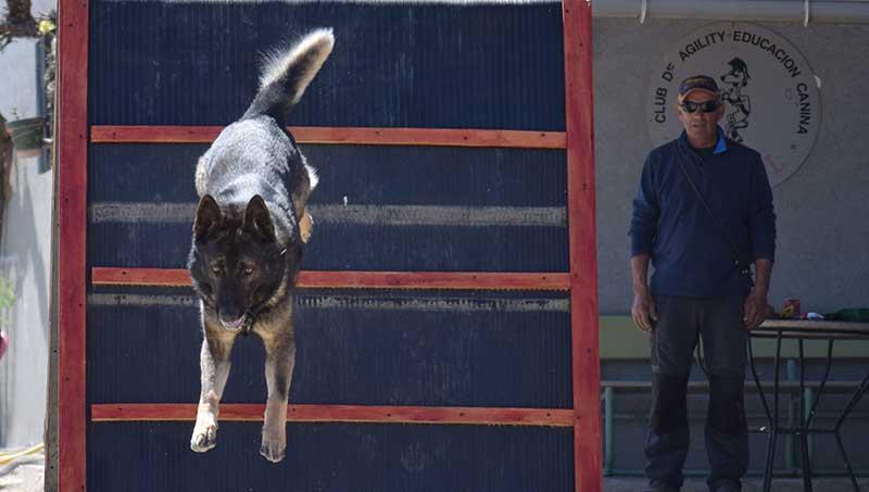 escuela para perros madrid