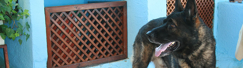 hoteles para perros madrid