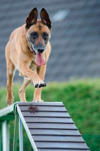 educacion canina madrid adiestramiento