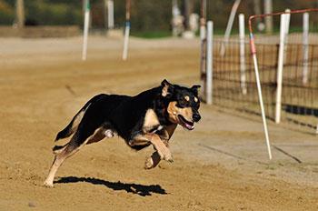 guarderia canina zona sur residencia