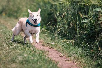 guarderia canina zona sur residencia perros