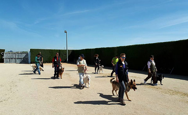 adiestrar perros Madrid