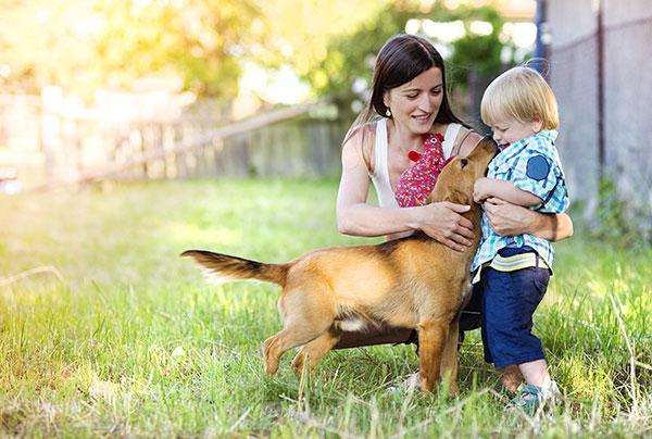 adiestrador-de-perros