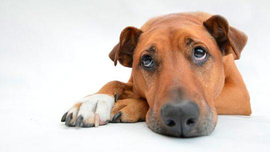 problemas de conducta de los perros