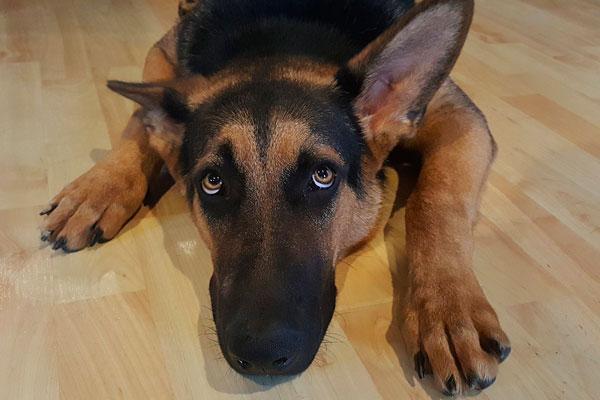 tranquilizar a un perro