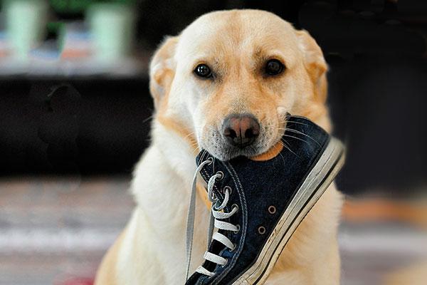 ensenar a un perro a no morder