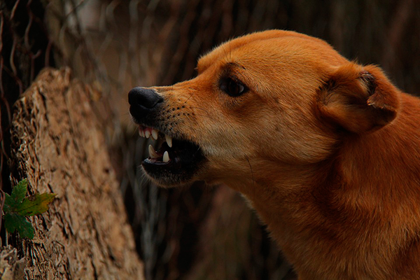 adiestrar un perro agresivo
