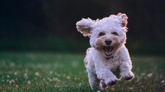 mejorar el comportamiento de tu perro