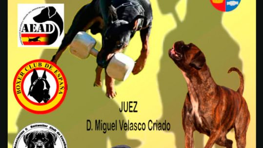 IV Campeonato Conjunto IGP