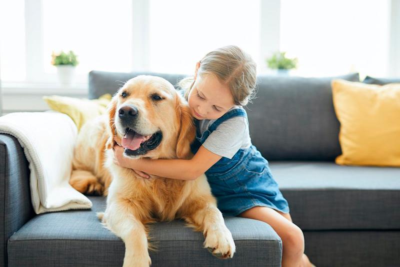 convivencia entre perros y niños
