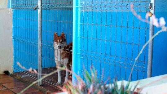 escoger la residencia para tu perro