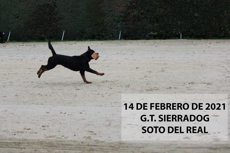 evento del deporte canino