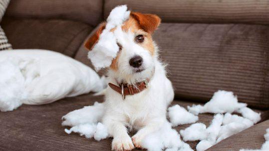 Ansiedad canina