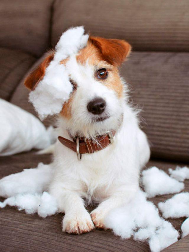 Protege a tu perro del frío
