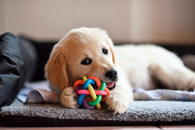 juguetes no recomendados para perros